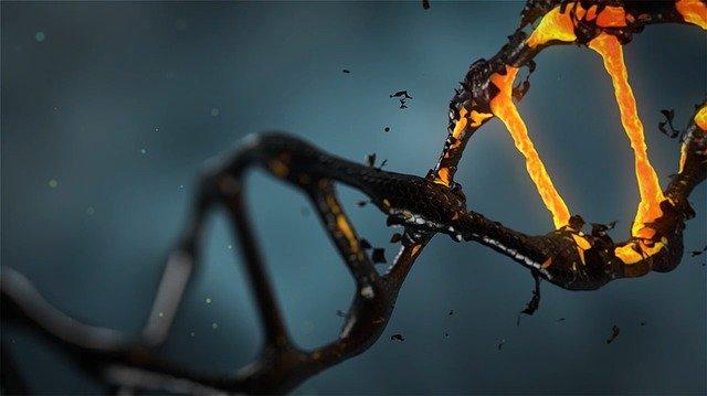 ADN dañado