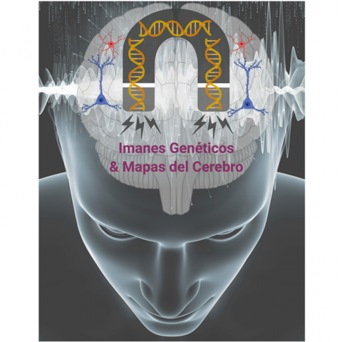 El nuevo indicador genético que se va a desarrollar transformará la actividad cerebral en una señal magnética que permitirá el mapeo completo de la actividad del cerebro.